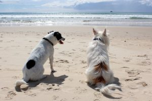 travelling with a dog to Normandy