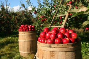 Top 10 Normandy foods