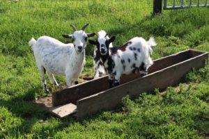 Family friendly farm in Normandy