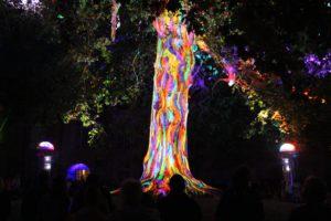 Bayeux's liberty tree